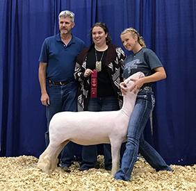 Harrison Show Lambs | Winners